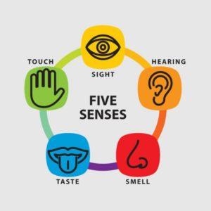 cinque-sensi-set-di-icone_62147502195